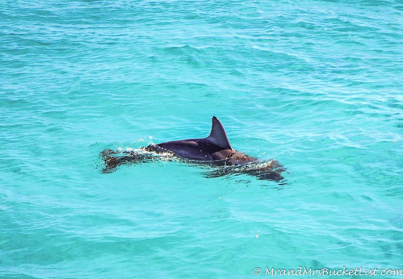 wildlife encounters in Western Australia 6.jpg