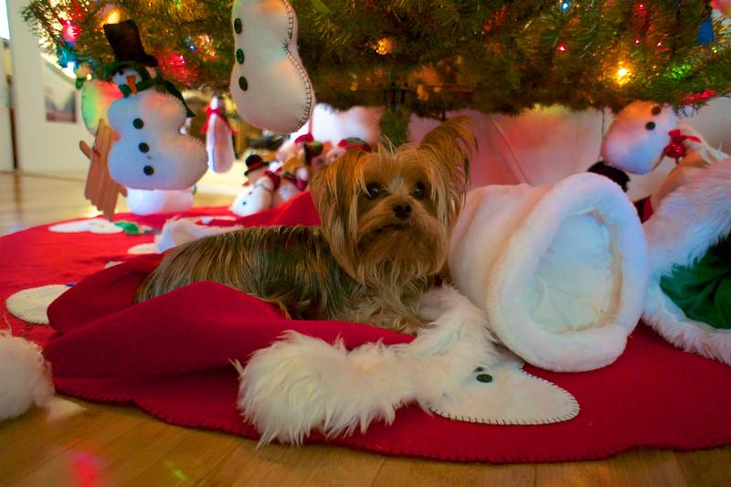CHRISTMAS 2015_ 7.jpg