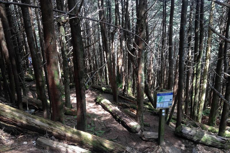 Camp Alice Trail (6,200')