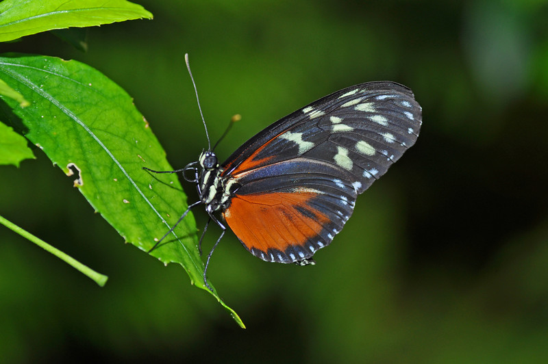 orangeblackwhite.jpg