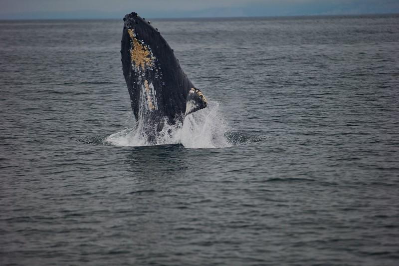Whales2018-08-21.jpg