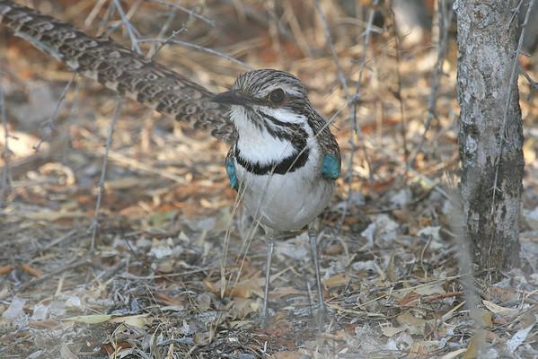 Madagascar-Birds