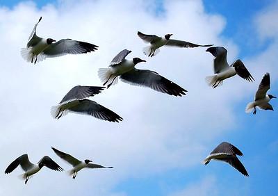 POC BIRDS