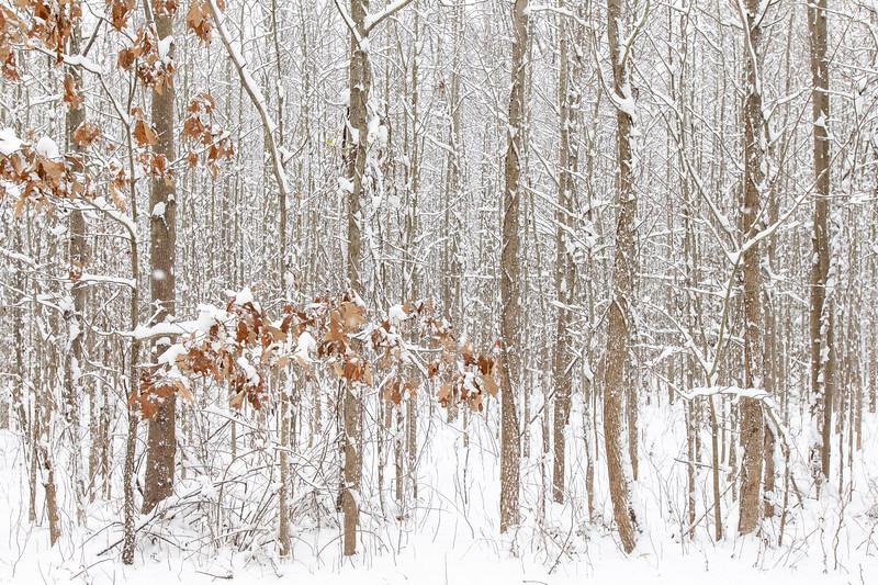 Snow13jan19-1362.jpg