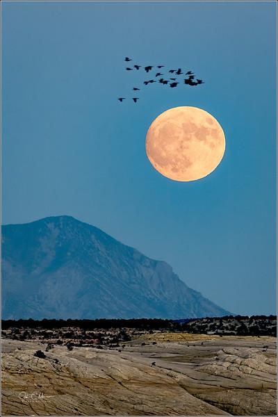 J50_0573 Moon Birds LPTW.jpg