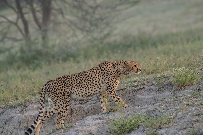 Tanzania_Feb_2018-100.jpg