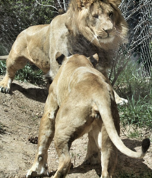 Cheyenne Mtn Zoo (178).jpg