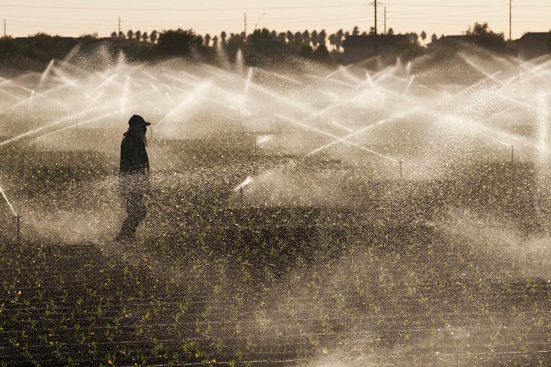 Farm Worker - Phoenix, AZ