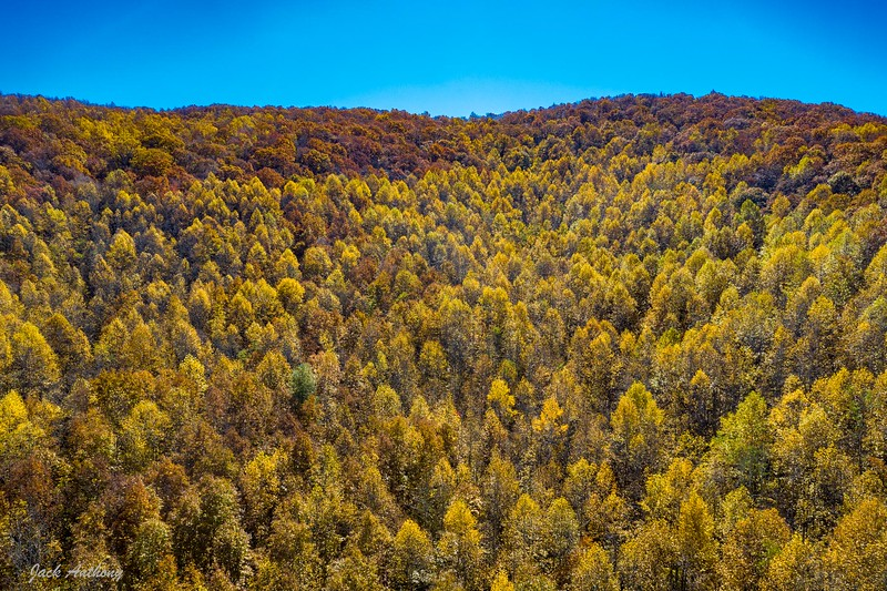 Poplar Tree Grove