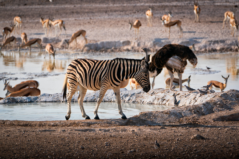 Animal Watering Hole in Etosha