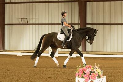 Horse 602