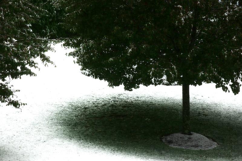 SnowShadow.jpg