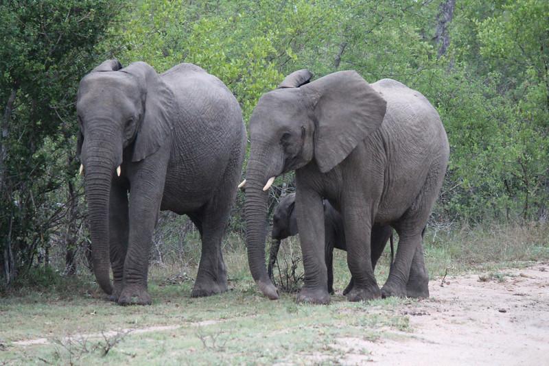 Africa Trip 2012 361.jpg