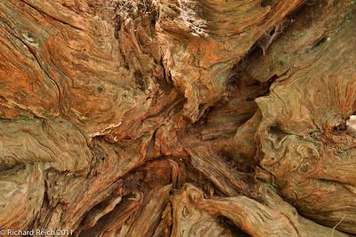 Wood, trees,bark & moss