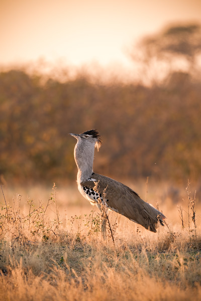 Botswana_June_2017 (4911 of 6179).jpg