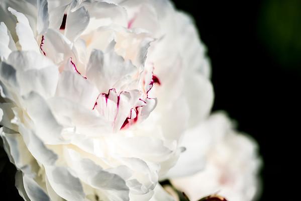 2012-05-19 - Presby Iris Gardens