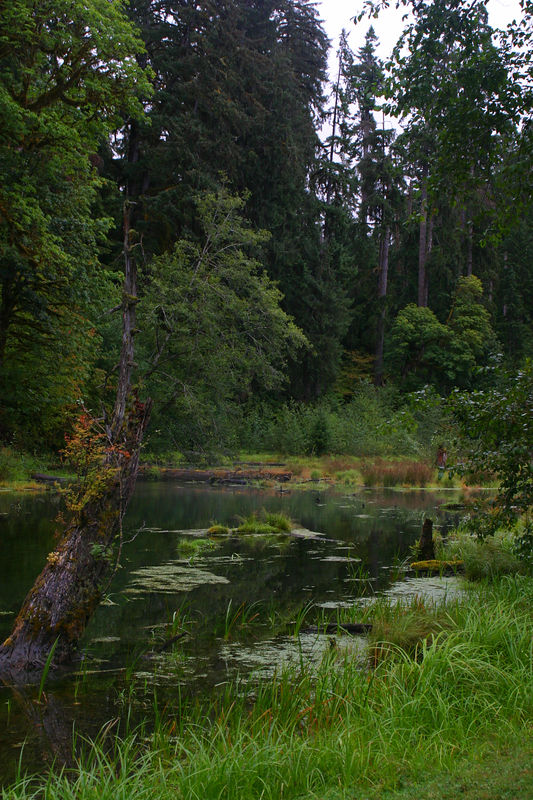 Rainforest_21aug04 058.jpg