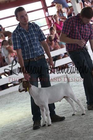 Ringshots - Boer/Meat Goat Wethers