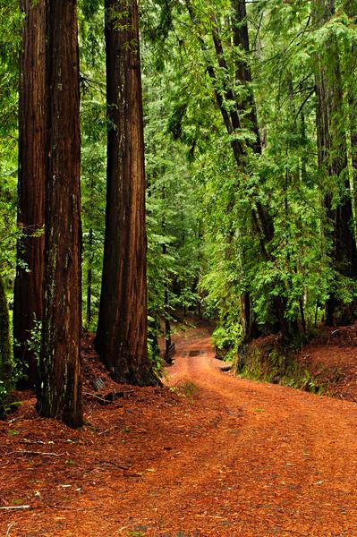 California Redwoods Big Basin