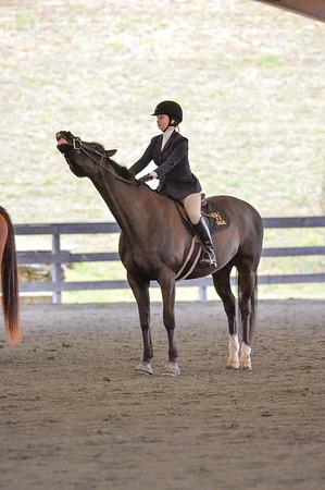 Equestrian Competiition
