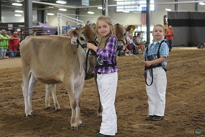 WI State Jersey Show 2017-Showmanship