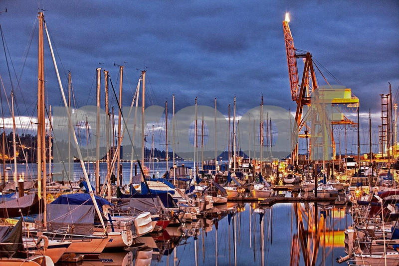 Fiddle Head Marina finds its home adjacent to the Port of Olympia in Olympia, WA. 5934