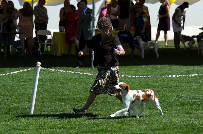 REDLINES HUNTING FOR MY HALO JH, SR43921107 7/27/2007. Breeder: Doreen Kearney. By DC, AFC Redlines Tequila Smoker -- CH Loki's Angel On A Carousel. Doreen & Tom Kearney . Dog. Kathy Grayson, Agent.