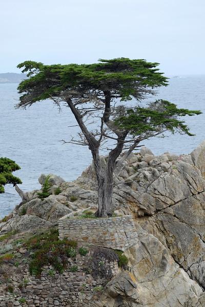 California Day 3 Monterey 05-29-2017 115.JPG