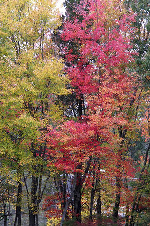 Fall Foliage Blue Hills
