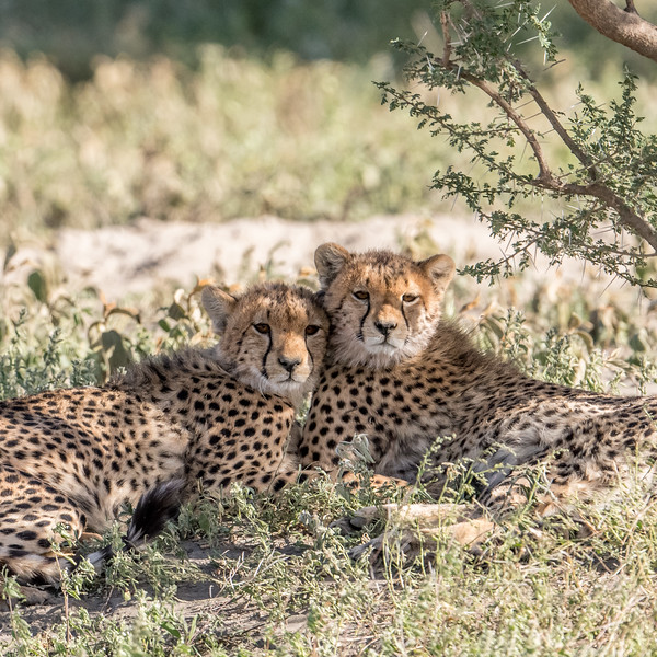 Tanzania_Feb_2018-58.jpg