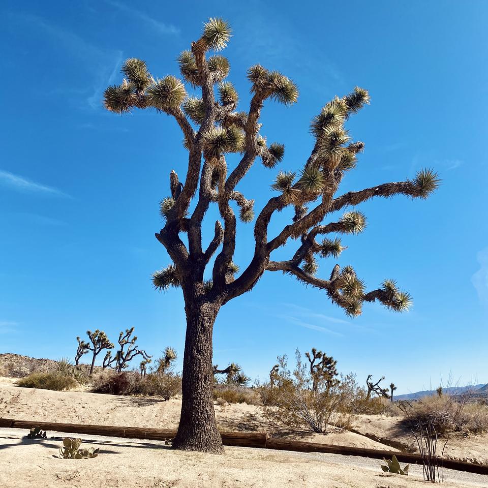 Christ Desert Park Yucca Valley California Joshua Tree