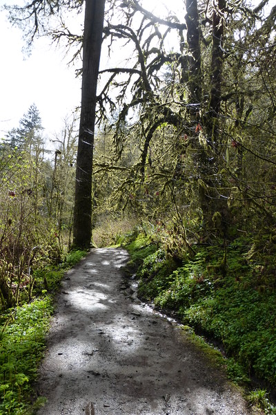 Part of the nature trail