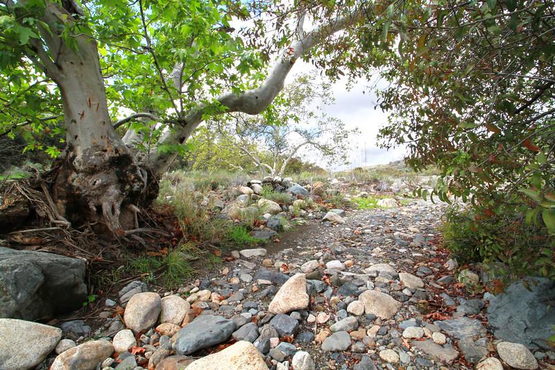 32633-Trabuco-Canyon-Rd-Mitchell-East-Trabuco-Canyon_89.JPG