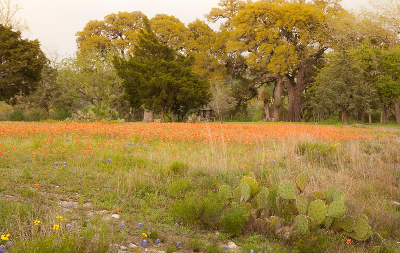 2015_4_3 Texas Wildflowers-8176.jpg