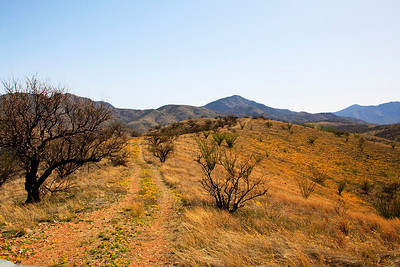 Buena Vista Mine