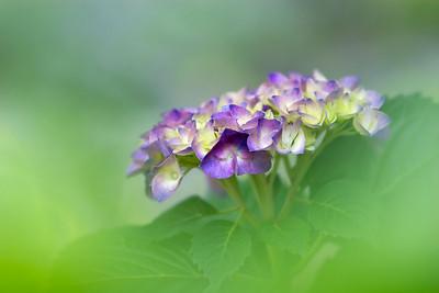 Art of the Flower