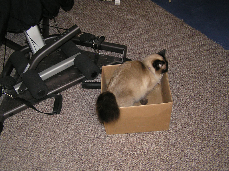 Cat in a box - 2