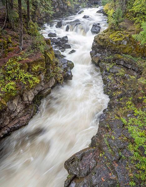Rogue River-16.jpg