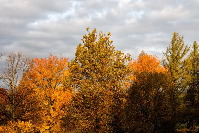 Sunlit Colors