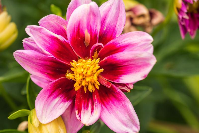 backyard_flowers-14.jpg