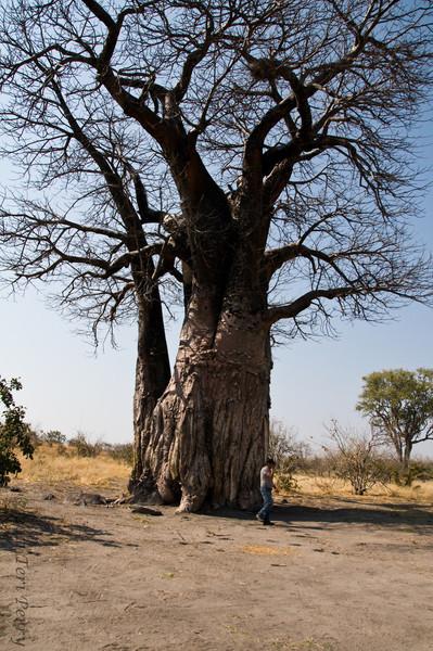 african scenery (4).jpg