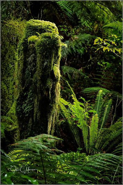 JM8_1325 Rain Forest Stump LPN WM.jpg