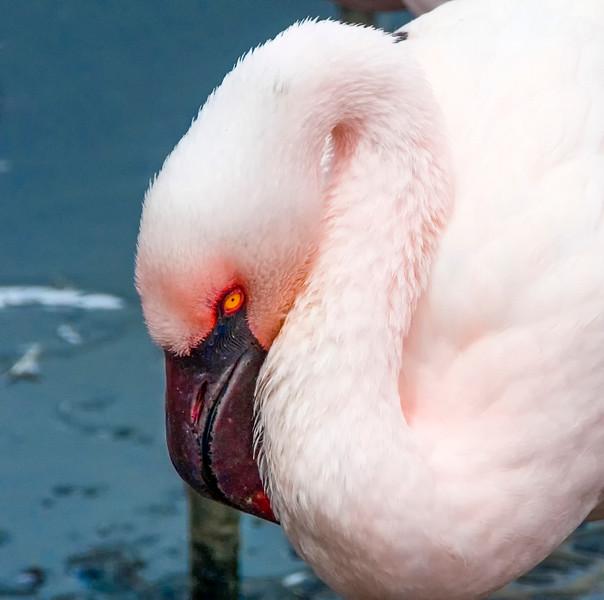 Flamingos-15.jpg