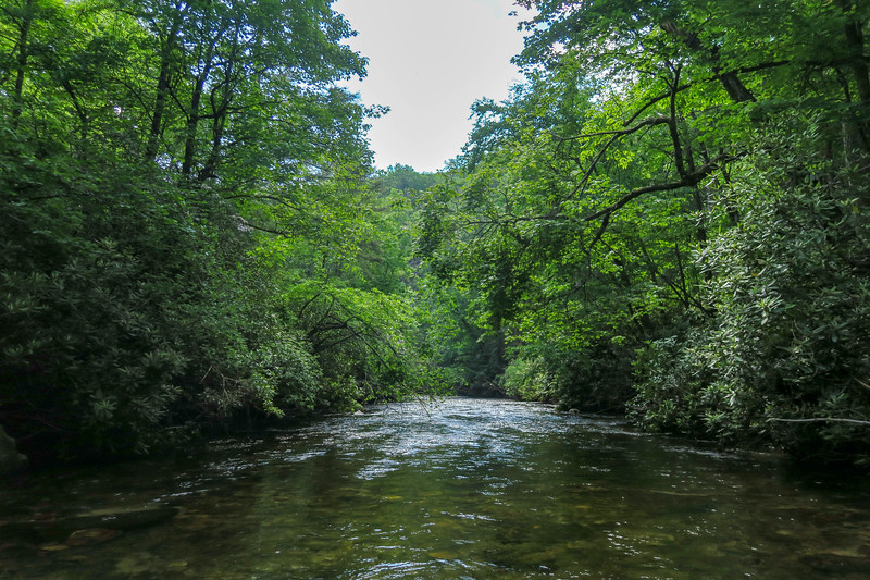 South Fork Mills River (Crossing #1/#5) -- 2,390'