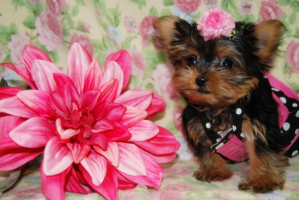 Puppies that have been featured in T.V. Shows & Movies