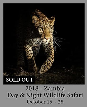 10-14-18 Zambia Safari