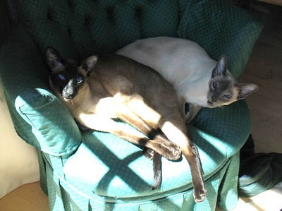 The Buddies enjoying the morning sun coming in through the bedroom french doors.