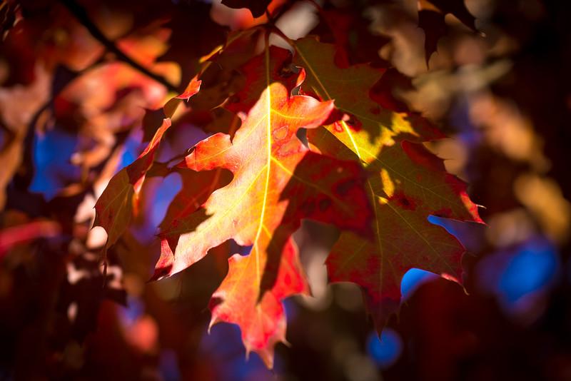 20151024-Fall Colors-65.jpg
