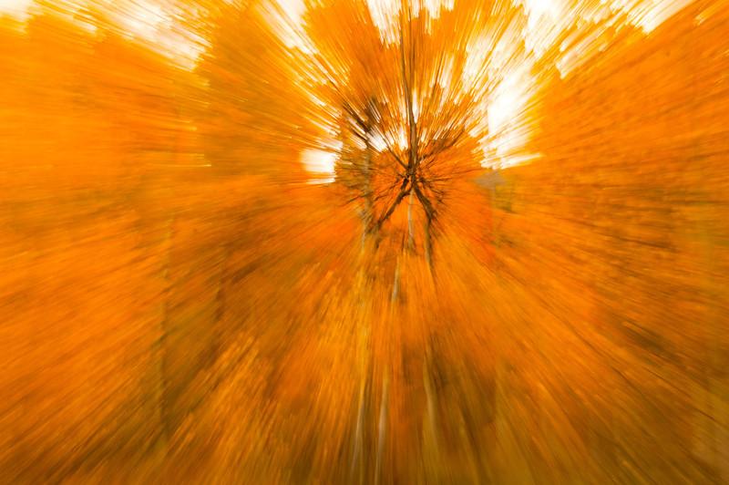 Fall Idaho-11.jpg