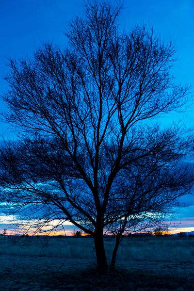 TreeSillouhette.jpg